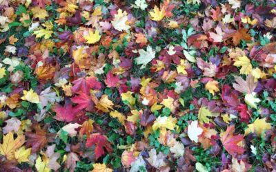 I alla våra underbara färger