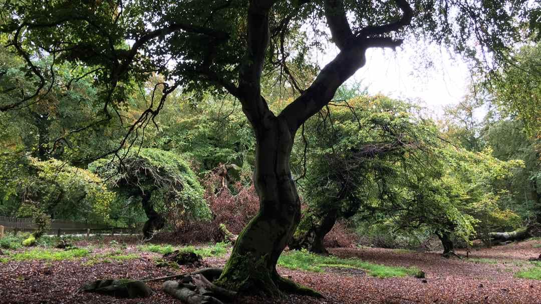 trollträd
